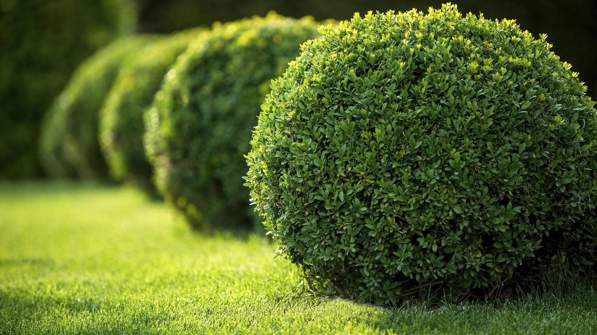 Southern Landscapes Landscape Contractor, Landscape Design and Lawn Care slide 1